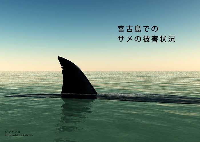 宮古島でのサメの被害状況