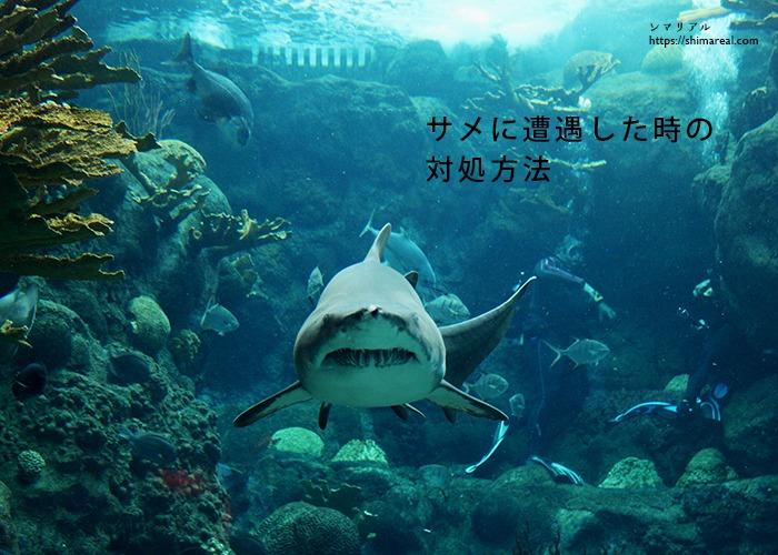 サメに遭遇した時の対処方法