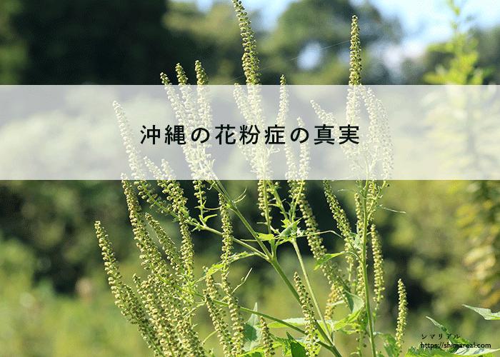 沖縄の花粉症の真実