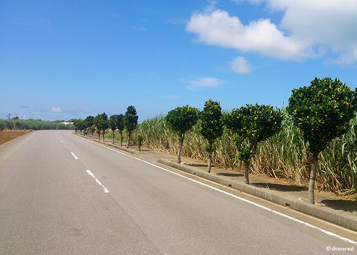 宮古島の道路