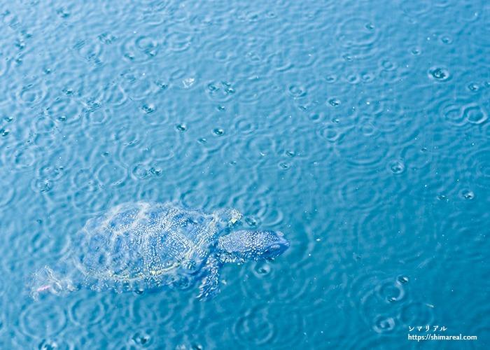 宮古島の雨の日に海でシュノーケリング